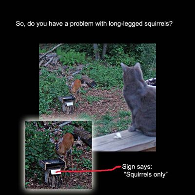 Long-legged squirrels-sign