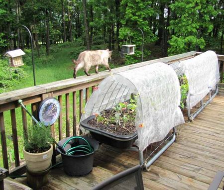 Covered deck Gardens