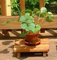 Cedarplantstand
