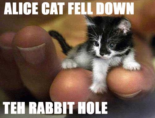 Alicecatfelldowntehrabbithole
