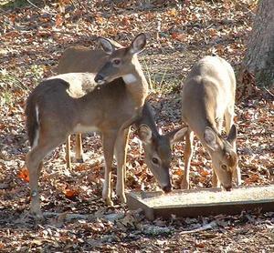 Deer90-111503