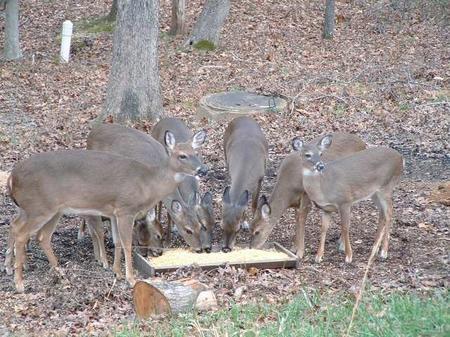 images/Deer-120303-026-web