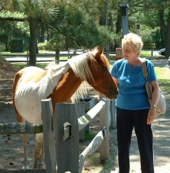 Shy-pony
