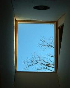 skylight28.JPG